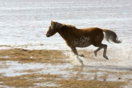 A galloping horse on the beach.